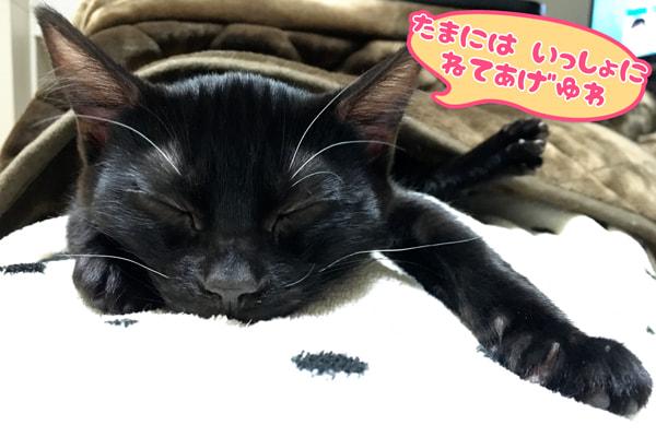 ベンガル猫と一緒に寝る