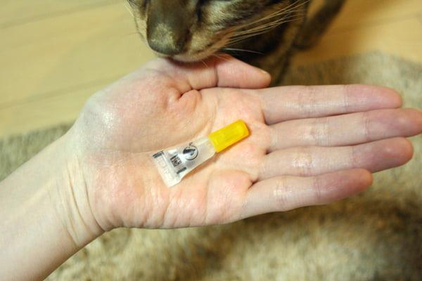 猫の耳ダニ治療にはレボリューション
