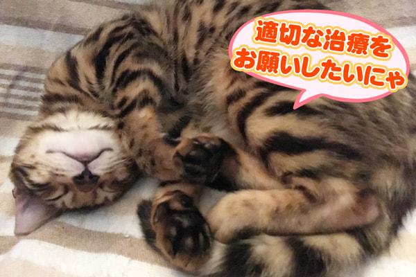 猫の耳ダニ治療について