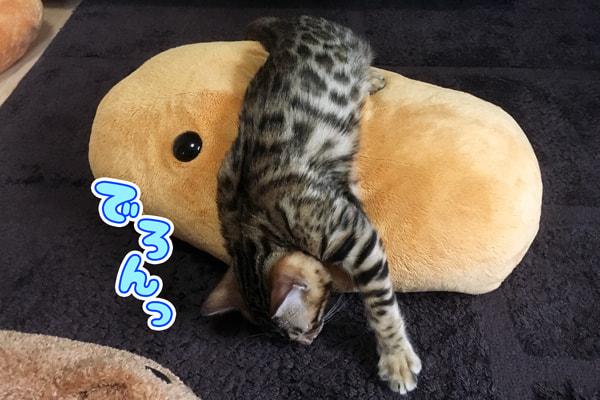ベンガルの仔猫はぬいぐるみでお昼寝