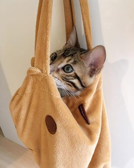 ベンガルの仔猫はバッグに入る