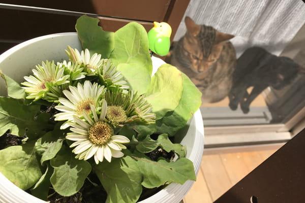 猫の避妊手術の適切な時期