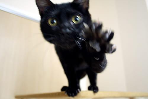猫の避妊手術でのデメリット