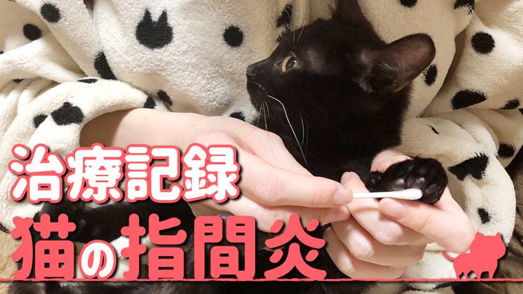 猫 指間炎 消毒