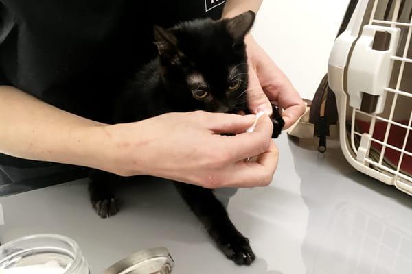 猫の指間炎の症状と治療過程