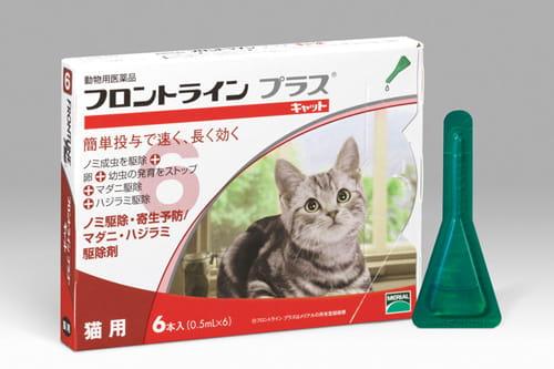猫の耳ダニ治療にはフロントラインプラス