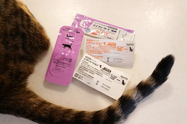 猫の耳ダニの簡単な予防と治療