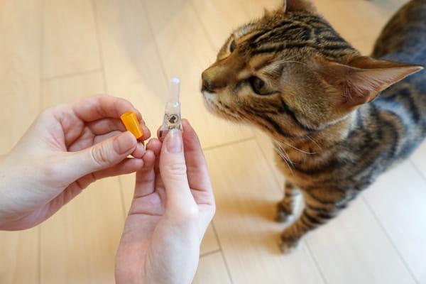 猫のフィラリアとノミ・ダニ予防にレボリューションを使ってみた