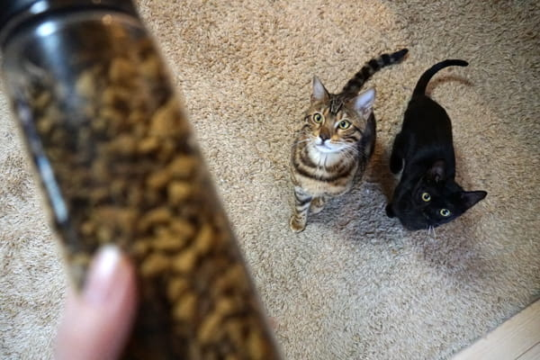 ピュリナワンを猫に食べさせてみた結果