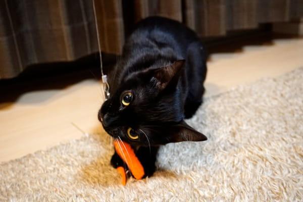 猫じゃらし取替パーツ毛虫のおもちゃで遊んでみた