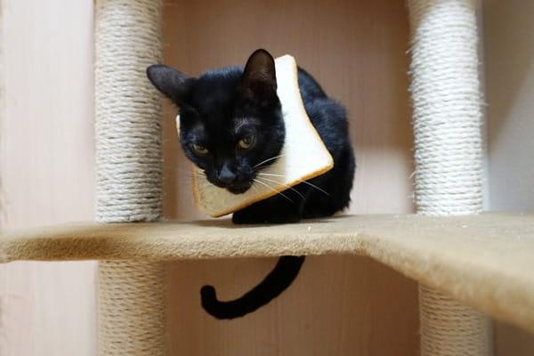 猫の避妊手術の内容