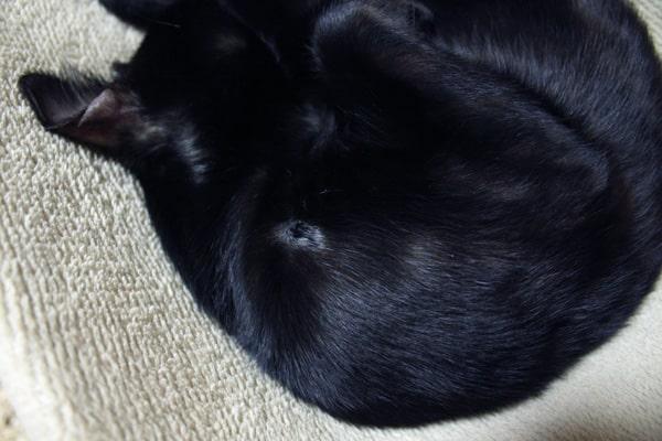 猫カビ治療記録