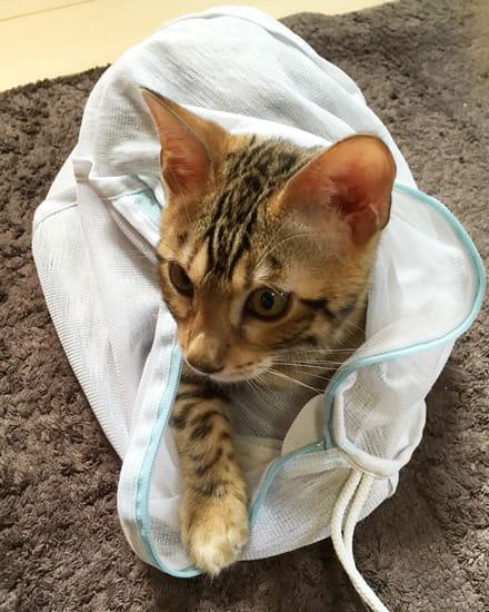 オス猫の去勢手術についての記録