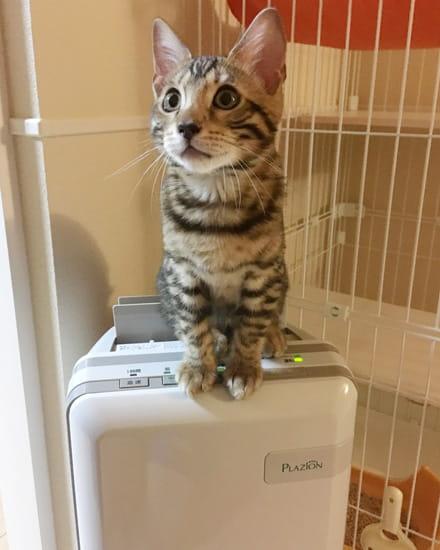 おすすめの猫の脱臭対策