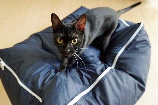 猫にオシッコされた羽毛布団をクリーニングに出した