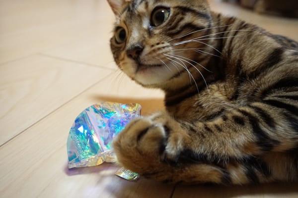 100均で見つけたオススメな猫のおもちゃ