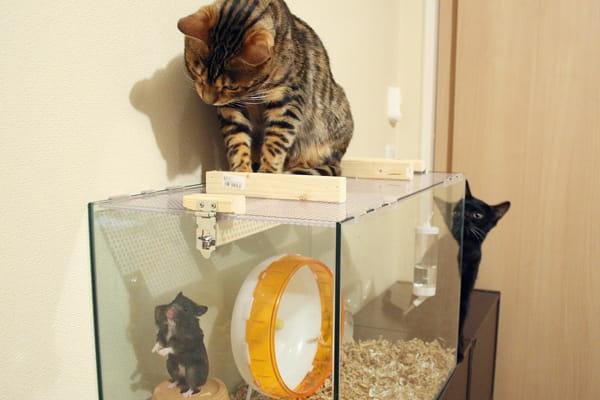 生肉は猫が食べても平気なのか