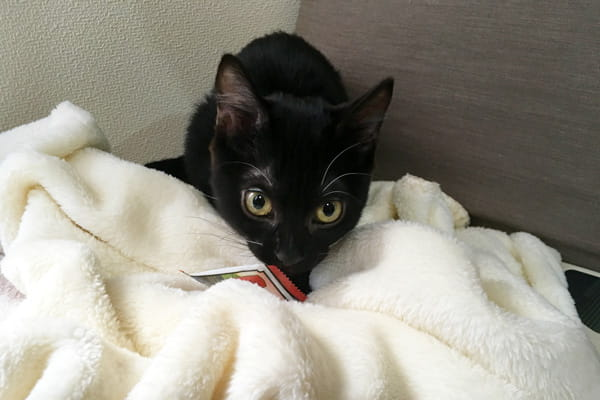 猫用暖房器具は電気代格安のミニホットカーペットがおすすめ!