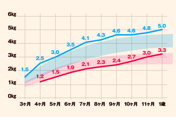 ベンガル猫の大きさと成長記録
