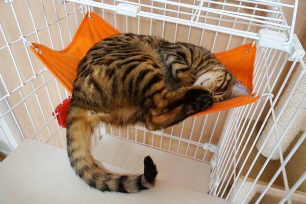 猫を飼うのにいくら必要なのかと、飼育用品の紹介