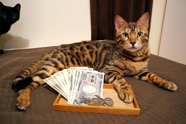 猫を飼ってから1年目の飼育費用