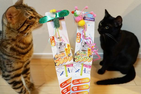 壊れにくい猫じゃらし『じゃれ猫ブンブン』に猫夢中!