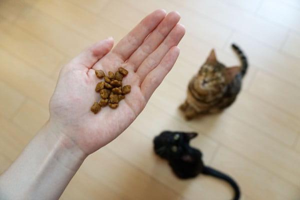 ロイヤルカナンは猫に最適のおすすめキャットフード