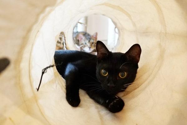 カシャカシャ キャットトンネルで遊んだ