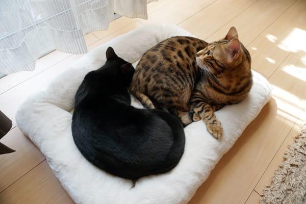 猫が2匹で使えるおすすめの冬用セレブベッド