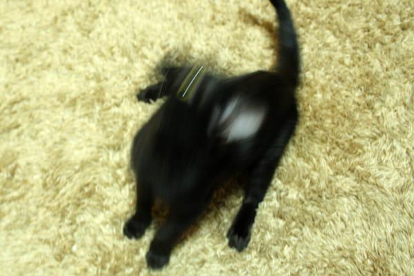 猫を撮影するのにおすすめのカメラ