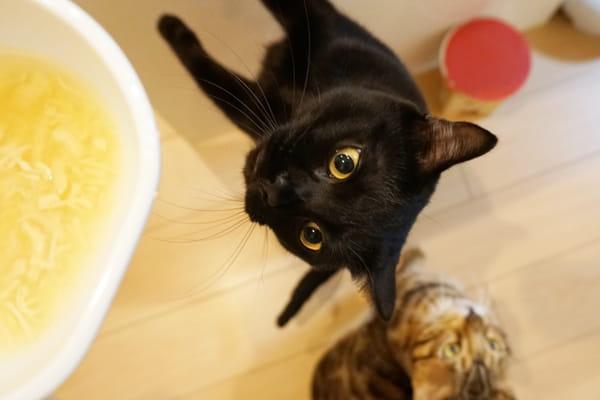 おすすめ猫おやつの「だしスープ」