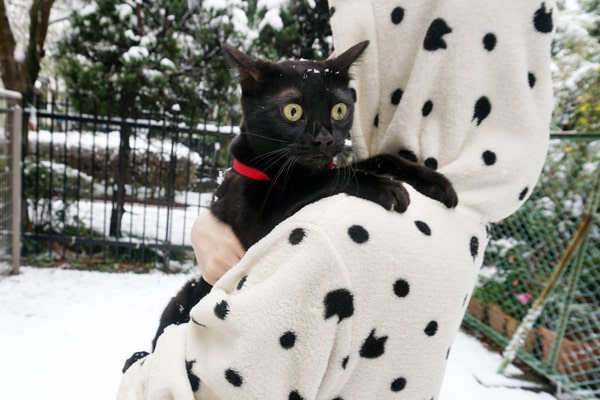 春の大雪を猫と満喫