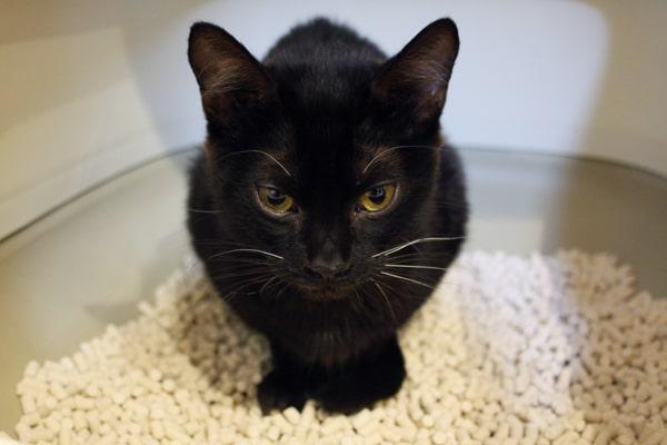猫の便秘は危険!治療費はいくらくらい?