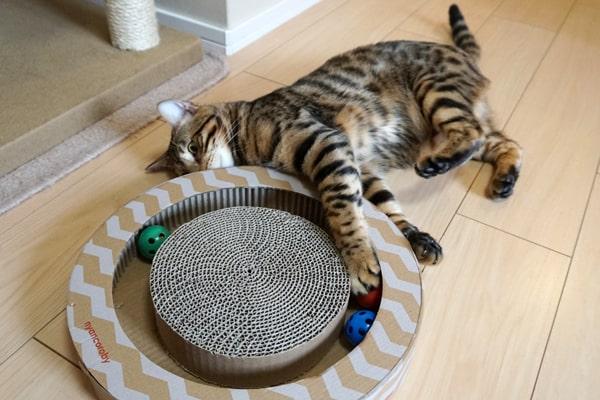 ニャンコロビーサークルの猫の評判