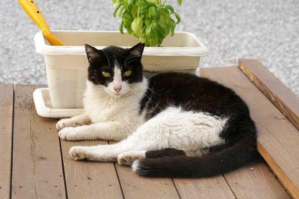 猫用ブラシの種類と効果