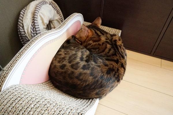 おすすめしたい猫用の爪とぎ
