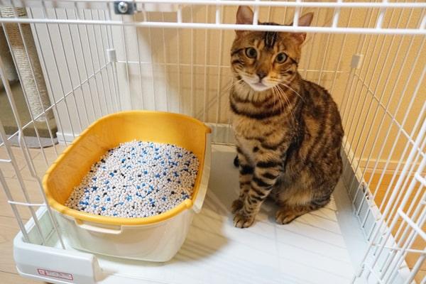 仔猫用トイレは必要なのか