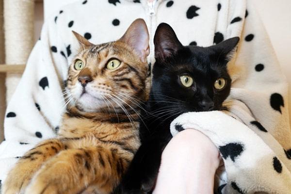 捨て猫を保護したらどうするべきか