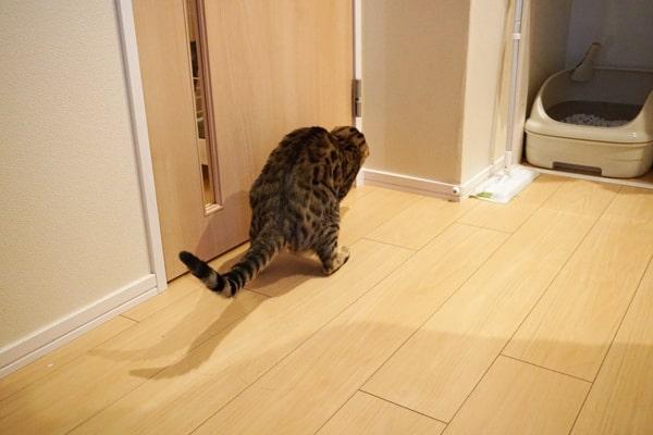 保護猫と先住猫との隔離生活