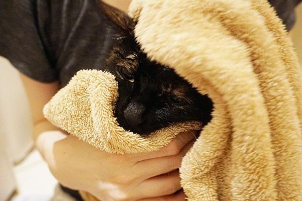 保護猫をお風呂に入れた