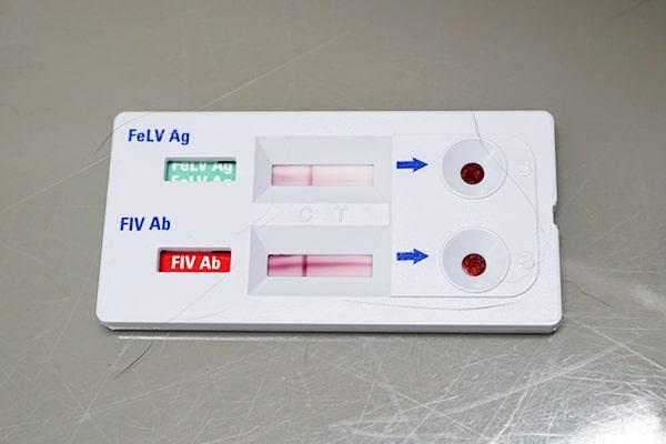 保護猫の血液検査の結果