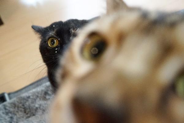 食欲旺盛な保護猫