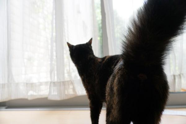 保護猫のお家散策