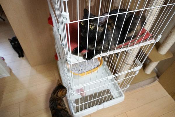 仲の悪い保護猫と先住猫