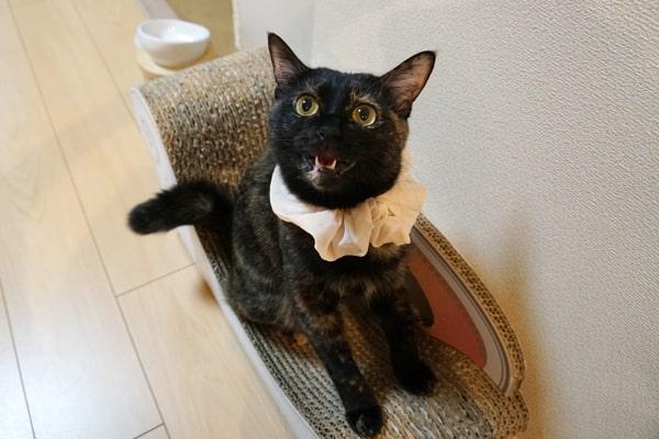 保護猫ボランティアに加入した話