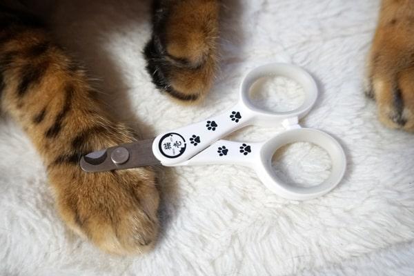 猫壱の爪切りレビュー
