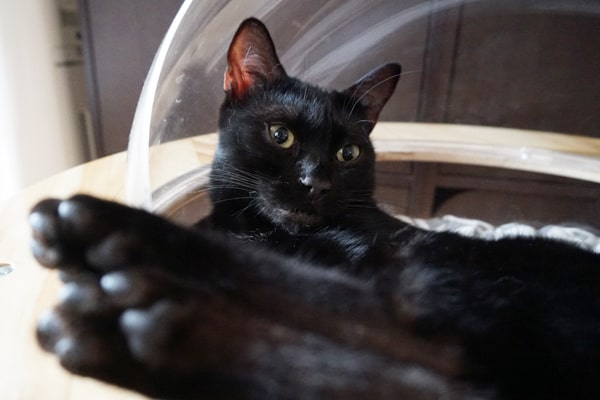猫達に大好評!宇宙船猫ハウスの評判