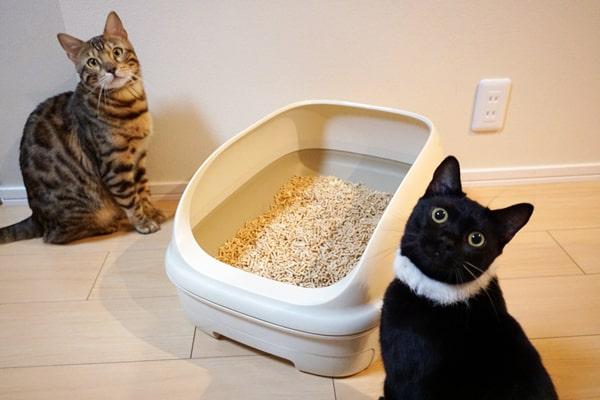 猫よりも人が好きな保護猫
