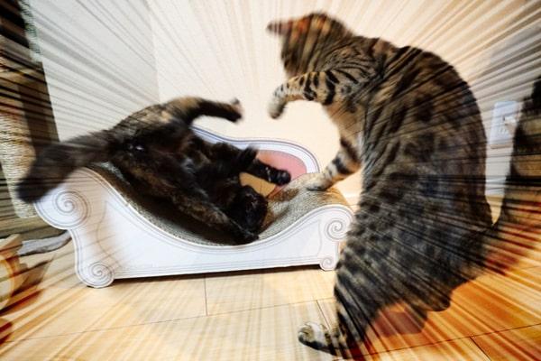 甘えん坊な保護猫と添い寝