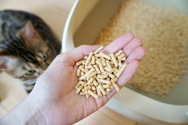 トイレでおしっこしない猫